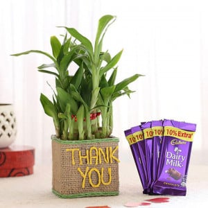 2 Layer Lucky Bamboo In Thank You Vase With Dairy Milk Chocolates - Send Flowers and Chocolates Online