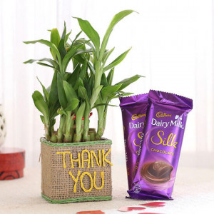 2 Layer Lucky Bamboo In Thank You Vase With Dairy Milk Silk Chocolates - Send Flowers and Chocolates Online