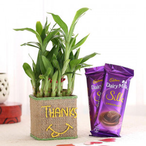 2 Layer Lucky Bamboo In Glass Vase With Dairy Milk Silk Chocolates - Send Diwali Plants Online