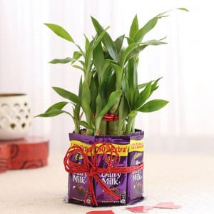 2 Layer Lucky Bamboo With Heart Shaped Tag - Send Plants n Chocolates Online
