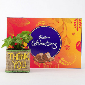 Syngonium Plant In Thank You Vase With Cadbury Celebrations - Send Plants n Chocolates Online