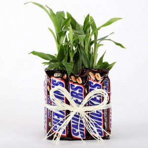 2 Layer Lucky Bamboo With Snickers - Send Flowers and Chocolates Online