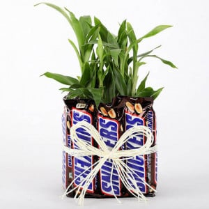 2 Layer Lucky Bamboo With Snickers - Send Plants n Chocolates Online