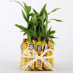 2 Layer Lucky Bamboo With 12 Chocolates - Send Flowers and Chocolates Online