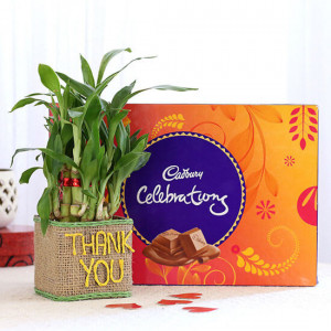 2 Layer Lucky Bamboo In Thank You Vase With Cadbury Celebrations - Send Plants n Chocolates Online