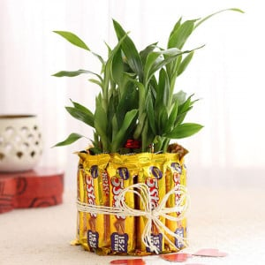 2 Layer Lucky Bamboo With 5 Star Chocolates - Mothers Day Gifts Online