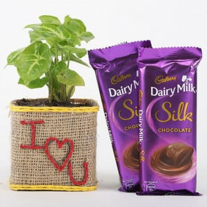 Syngonium Plant With Dairy Milk Silk For Valentines Day - Send Plants n Chocolates Online