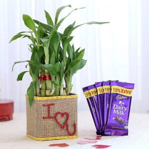 2 Layer Lucky Bamboo In I Love U Glass Vase With Dairy Milk Chocolates - Send Plants n Chocolates Online