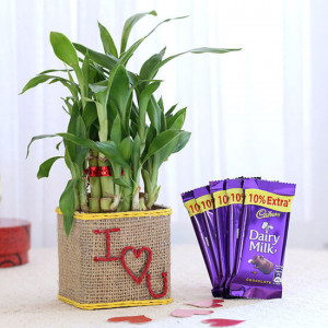 2 Layer Lucky Bamboo In I Love U Glass Vase With Dairy Milk Chocolates - Send Diwali Plants Online