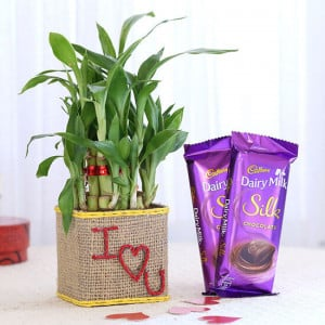 2 Layer Lucky Bamboo In I Love U Glass Vase With Dairy Milk Silk Chocolates - Send Diwali Plants Online
