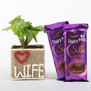 Syngonium Plant in Love Wife Vase With Dairy Milk Silk Chocolates - Send Flowers and Chocolates Online