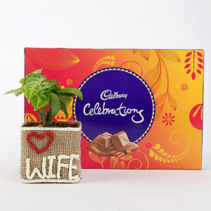 Syngonium Plant in Love Wife Vase With Cadbury Celebrations - Send Plants n Chocolates Online