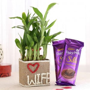 2 Layer Lucky Bamboo For Wife With Dairy Milk Silk Chocolates - Send Flowers and Chocolates Online