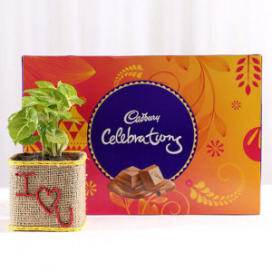 Syngonium Plant With Cadbury Celebrations For Valentines Day - Send Flowers and Chocolates Online