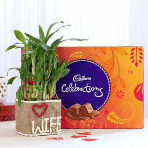 2 Layer Lucky Bamboo For Wife With Cadbury Celebrations - Send Plants n Chocolates Online