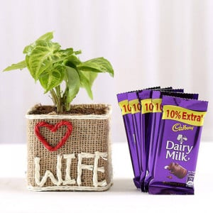 Syngonium Plant in Love Wife Vase With Dairy Milk Chocolates - Send Diwali Plants Online