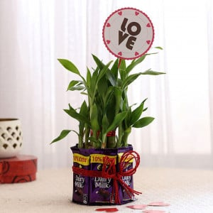 Bamboo with Love Tag & Dairy Milk Combo - Send Flowers and Chocolates Online