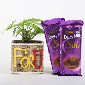 Syngonium Plant in For You Vase & Dairy Milk Silk Chocolates - Send Flowers and Chocolates Online