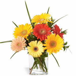 Crisp n Clear - Glass Vase Arrangements