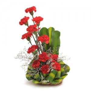 Ruby Red 12 Red Carnations - Send Carnations Flowers Online