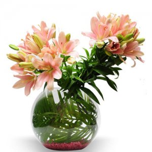 Pretty pink - Online Gift Shop India - Same Day Delivery Gifts Online