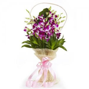 Simply Sweet - Buy Orchids Online in India
