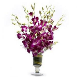 Hello Beautiful Lady - Buy Orchids Online in India