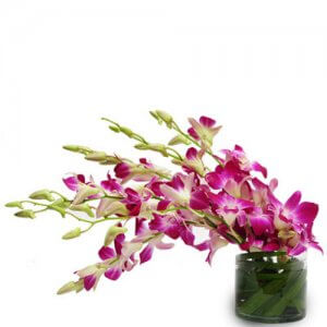 Purple Paradise - Buy Orchids Online in India