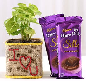 Plants with Chocolates